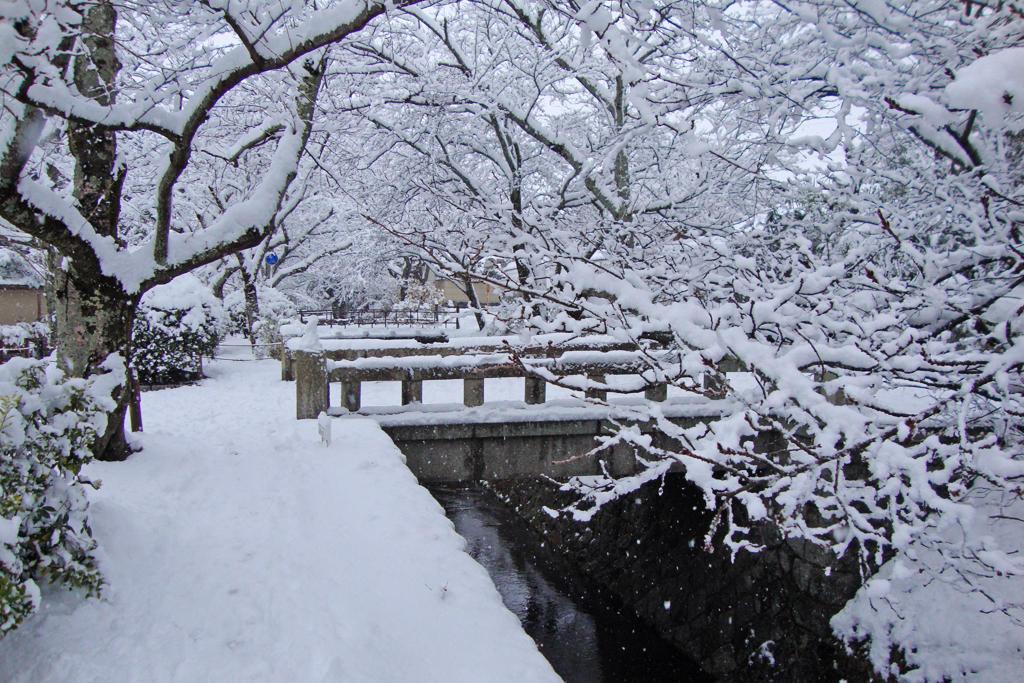 哲学の道・雪の写真素材