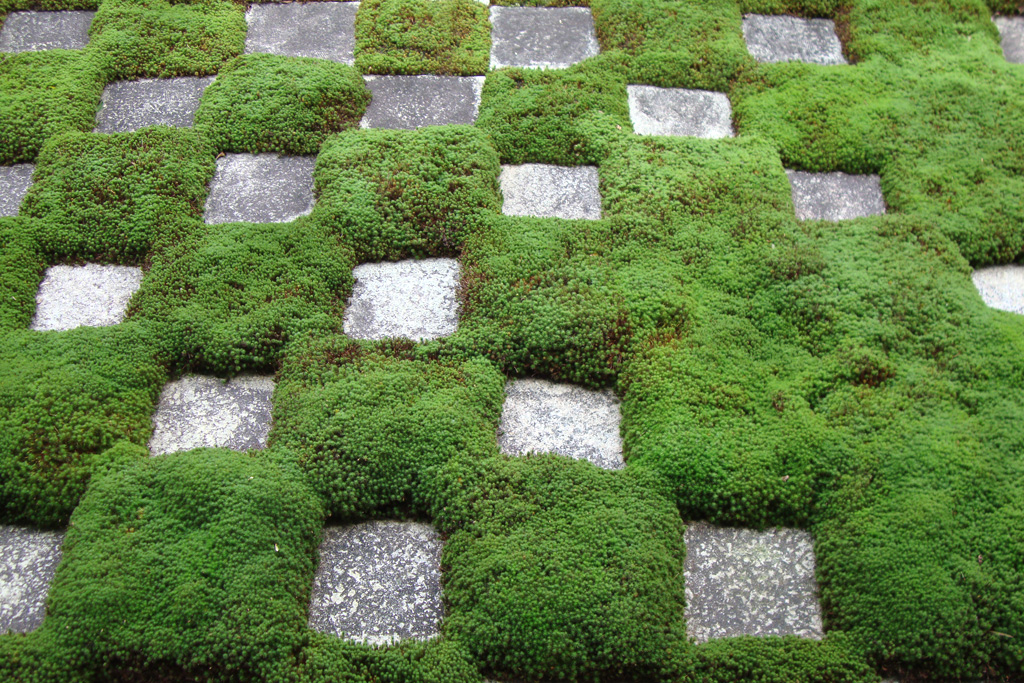 東福寺の苔の写真素材