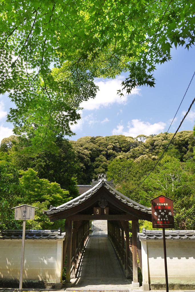 東福寺のえんげつ橋の青もみじの写真素材