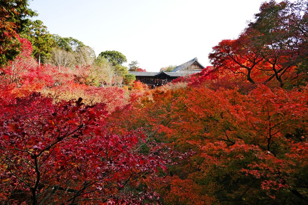 東福寺の紅葉の写真素材