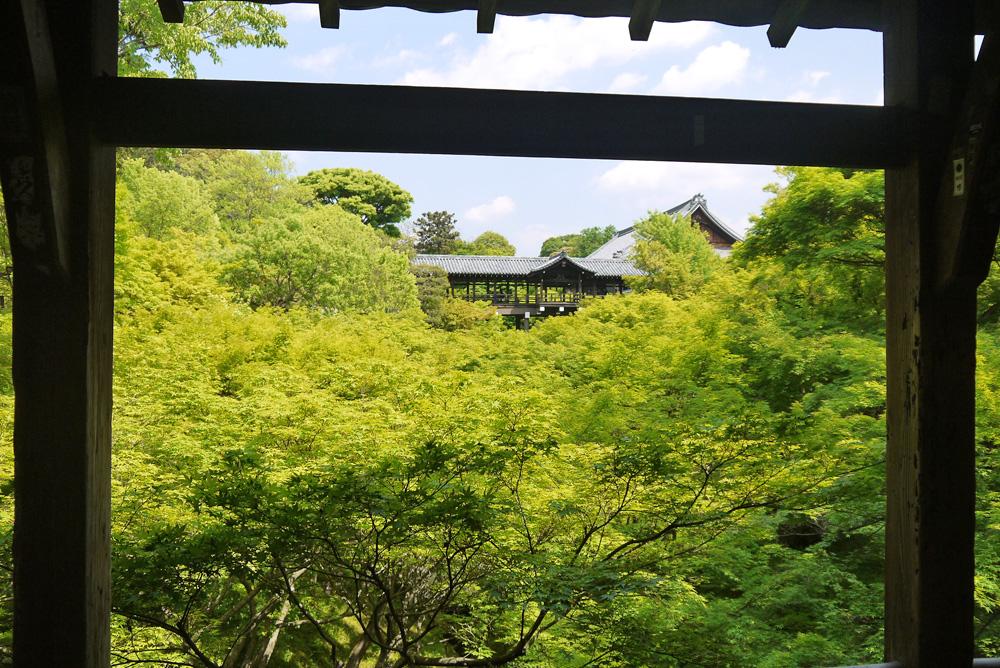 東福寺の青もみじ