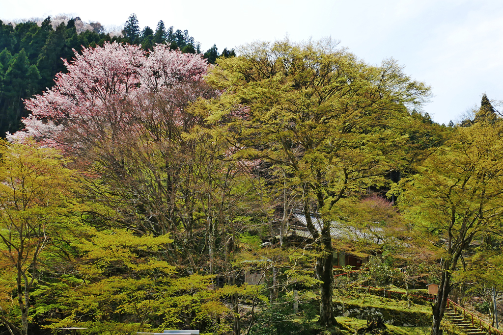 桃源山地蔵院の写真素材