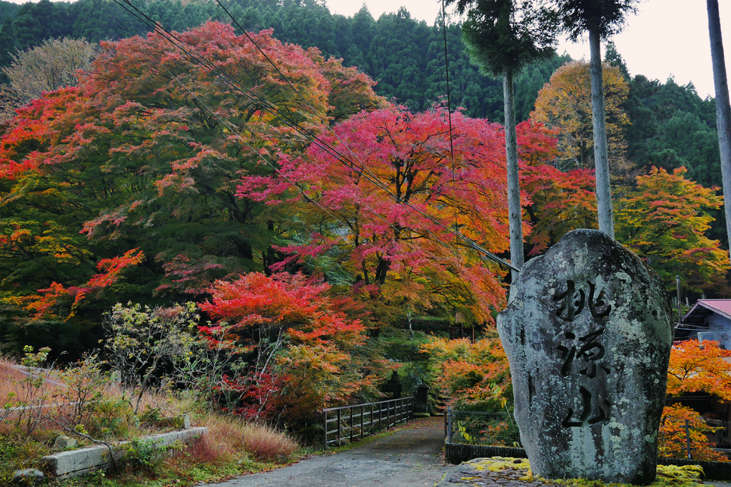 桃源山地蔵院の紅葉 写真素材