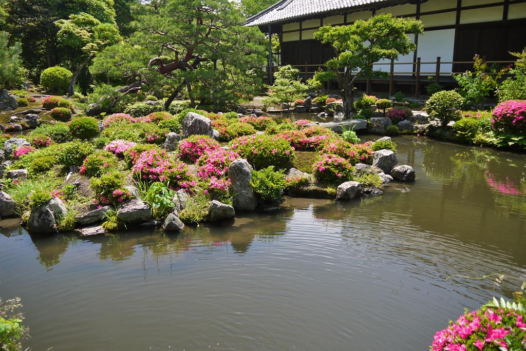 等持院のサツキ庭園の写真素材