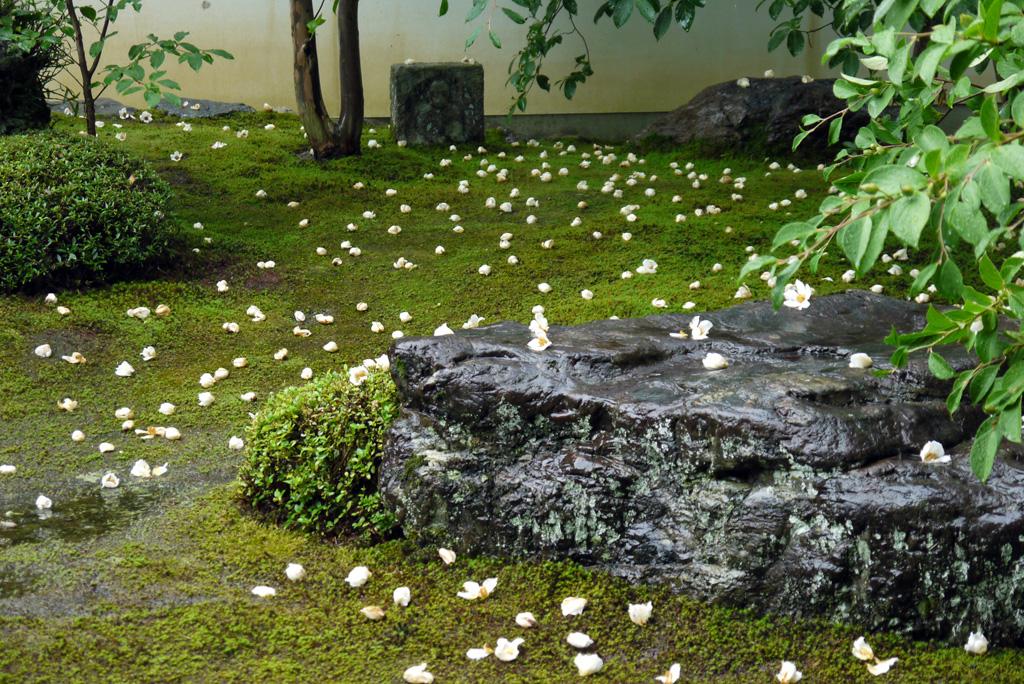 妙心寺東林院の沙羅の写真素材