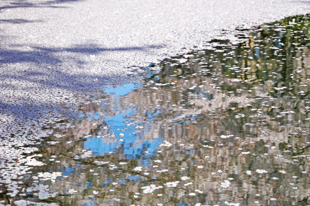 伏見 宇治川派流の写真素材