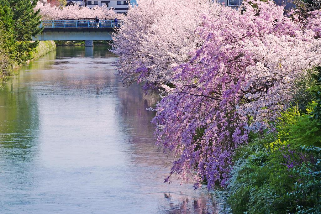 伏見 濠川の写真素材