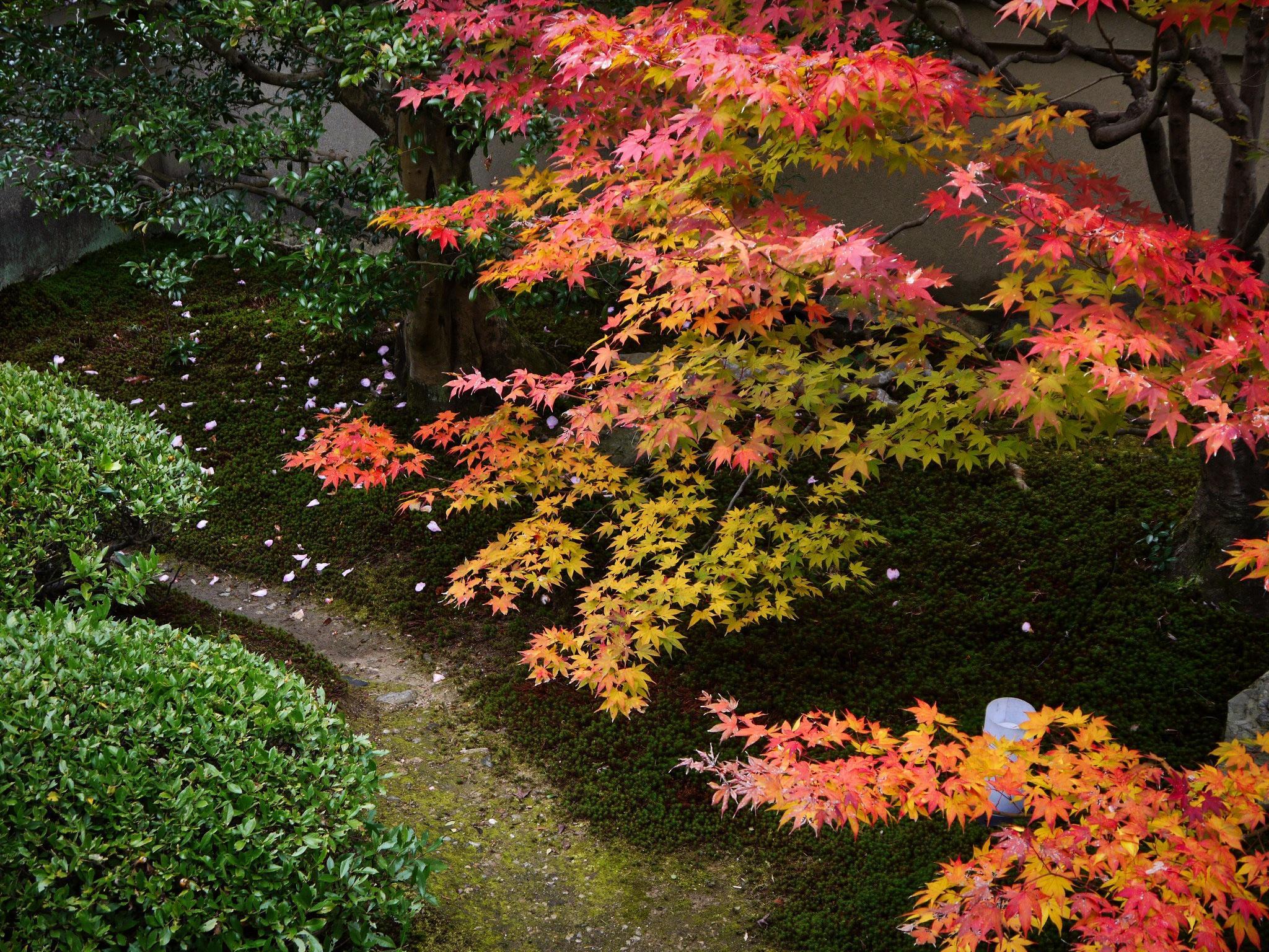 雲龍院の紅葉の写真素材