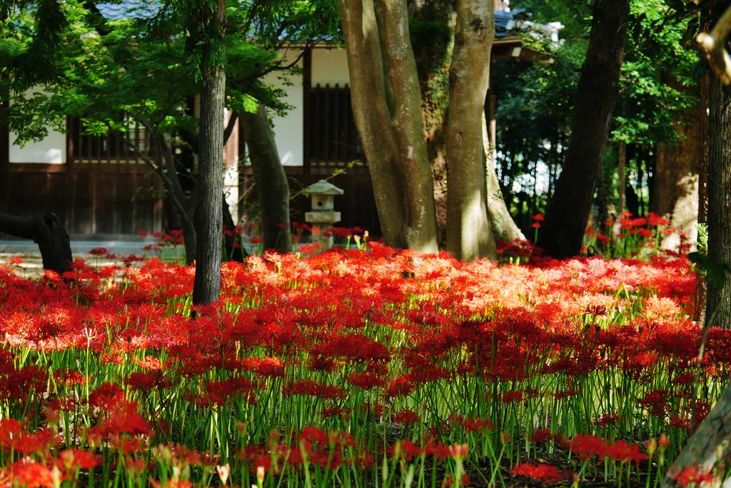 若宮八幡宮(八幡市)の写真素材