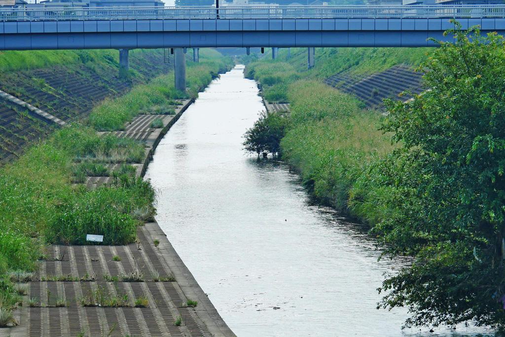 山科川の写真素材