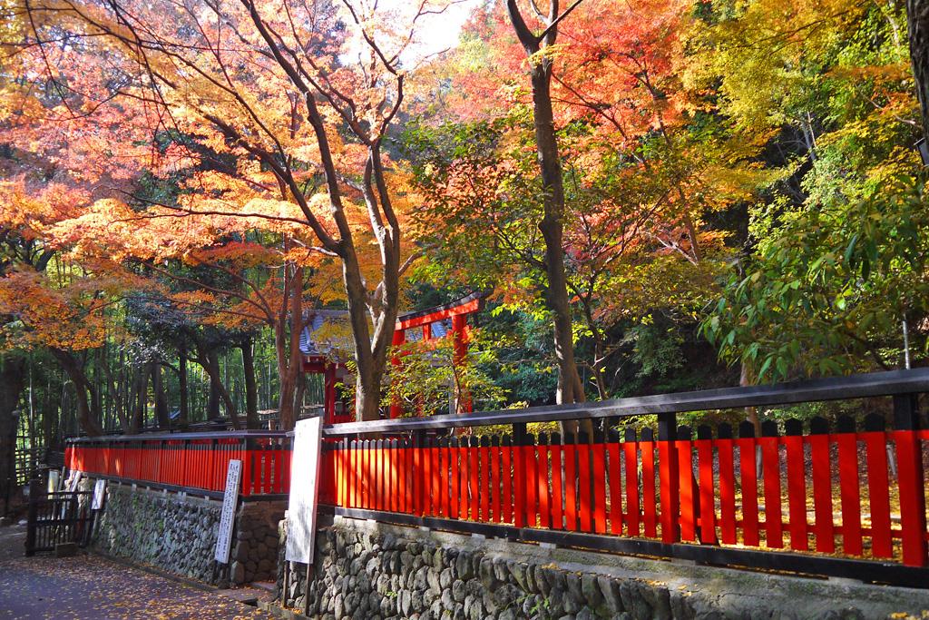 山崎聖天の稲荷神社の紅葉写真素材