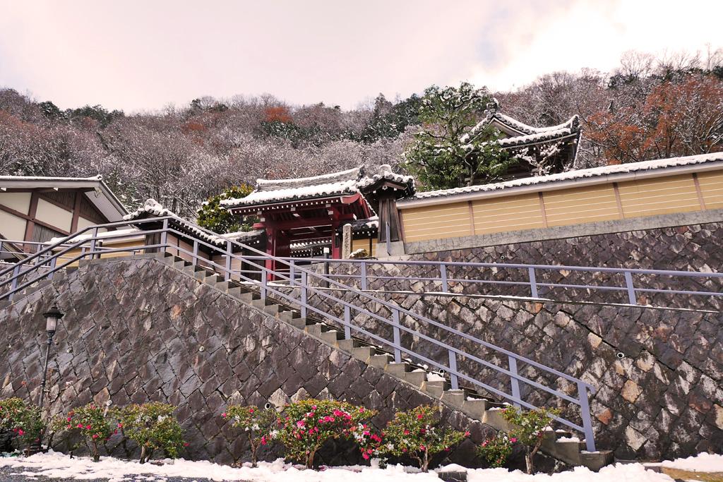 雪 養福寺の写真素材
