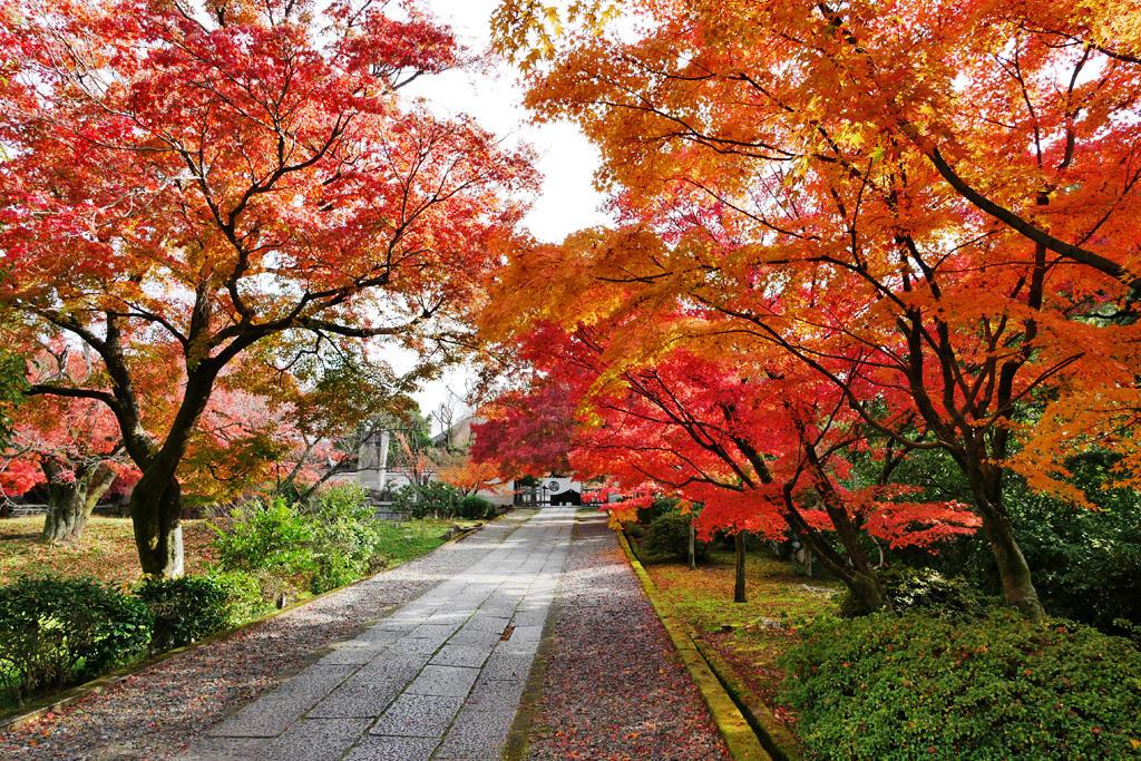 養源院の紅葉の写真素材