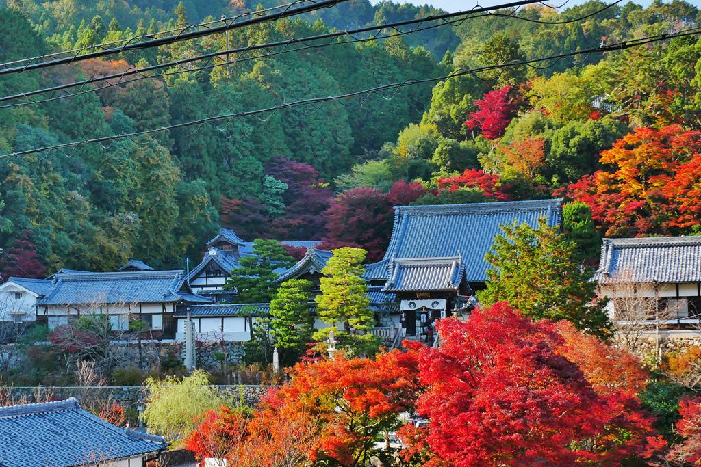 楊谷寺の紅葉の写真素材