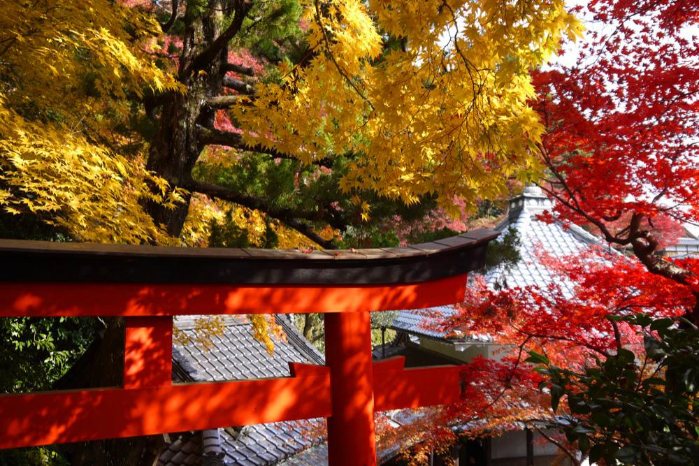 揚谷寺の紅葉の写真素材