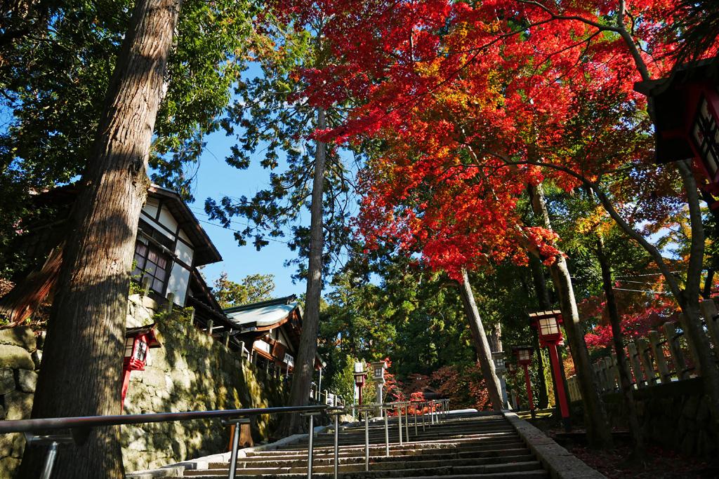 吉田神社の紅葉の写真素材