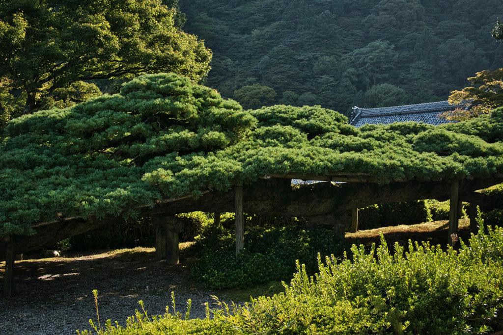 善峯寺の写真素材
