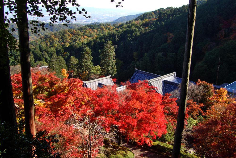 善峯寺の紅葉の写真素材
