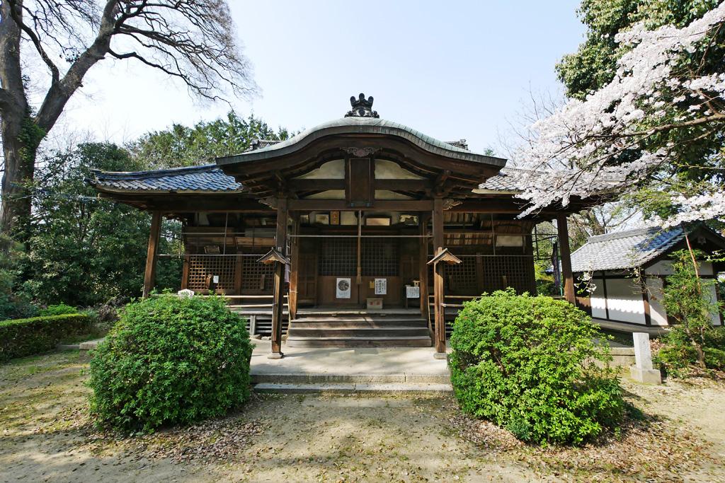 光福寺(久世)の桜の写真素材
