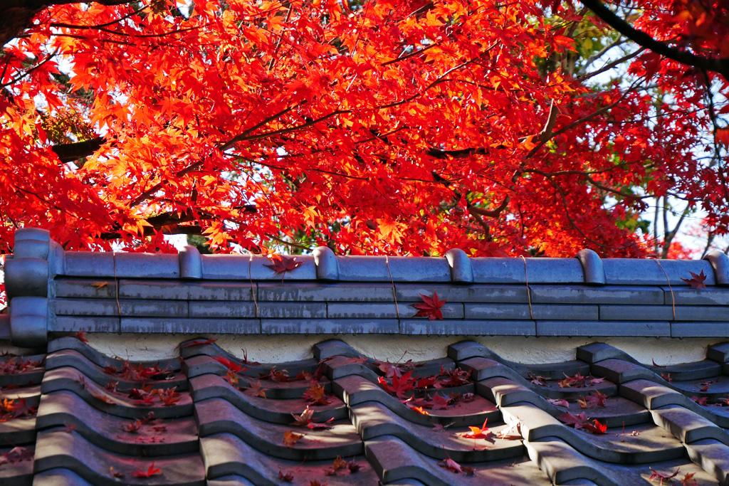 禅華院の紅葉写真素材