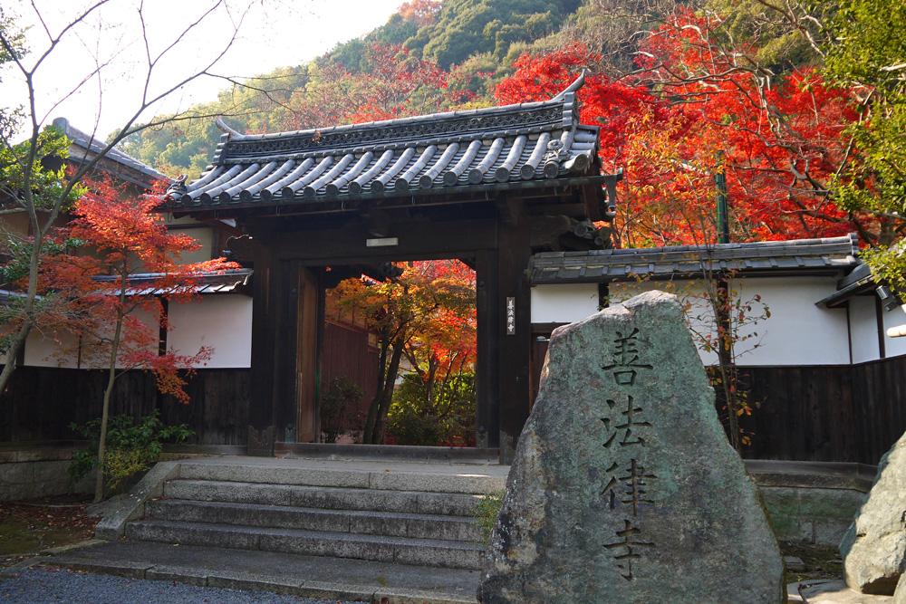 善法律寺の紅葉の写真素材