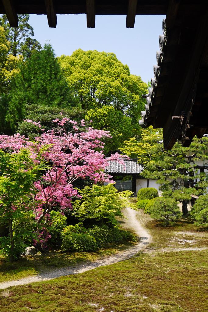 随心院の庭園の写真素材